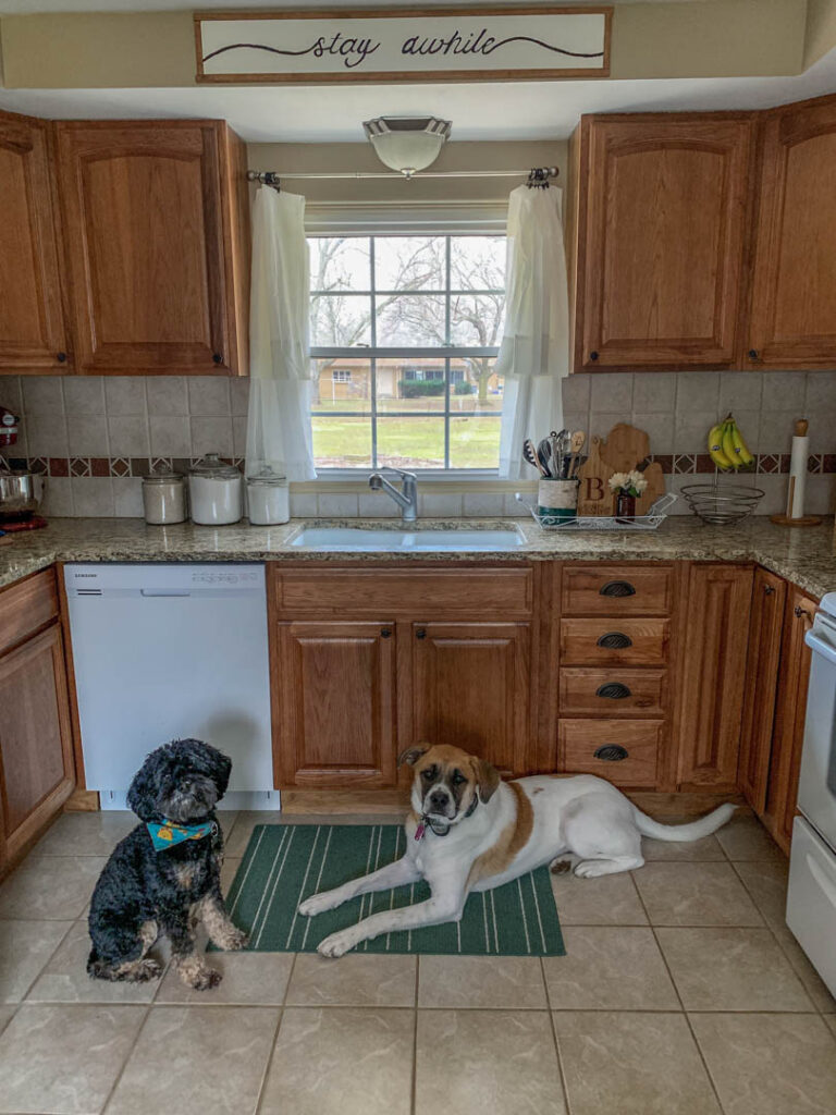 Two cute dogs sitting in a wood kitchen.